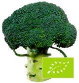 brocoli-exterior-eco